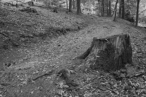 Waldwege (3)