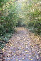 Waldwegimpression