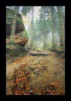 Waldwegnebelstimmung