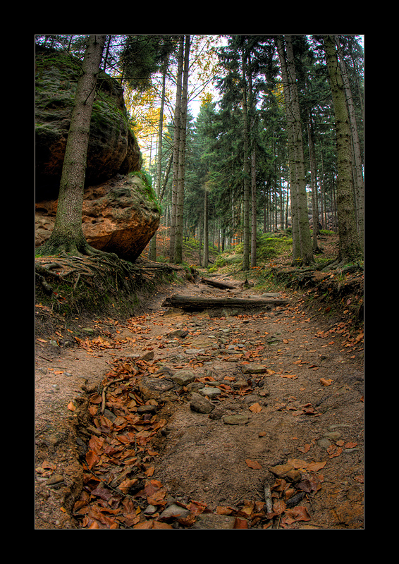 Waldweg(ohne)nebelstimmung