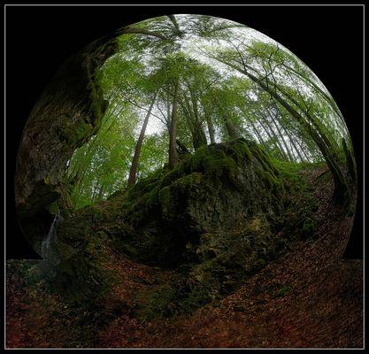 Waldwelt
