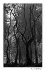 Waldwelten 2
