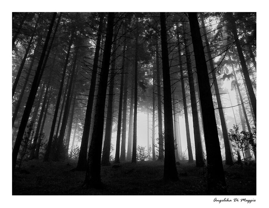 Waldwelten 3