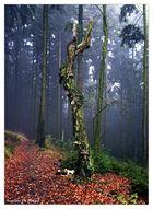 Waldwelten 4