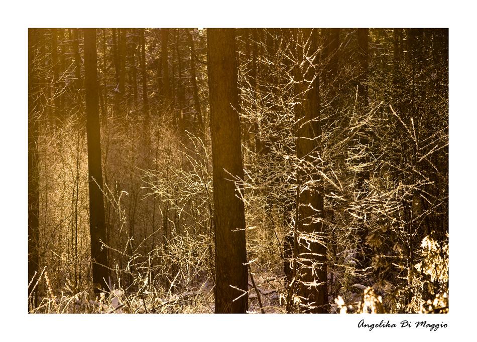 Waldwelten 5