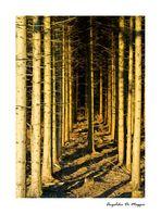 Waldwelten 6