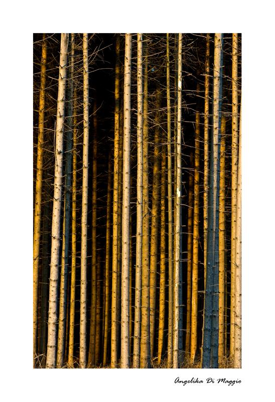 Waldwelten 7