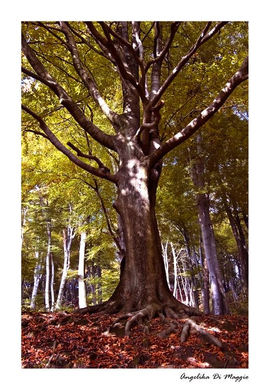 Waldwelten 8