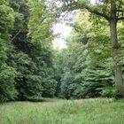 Waldwiese