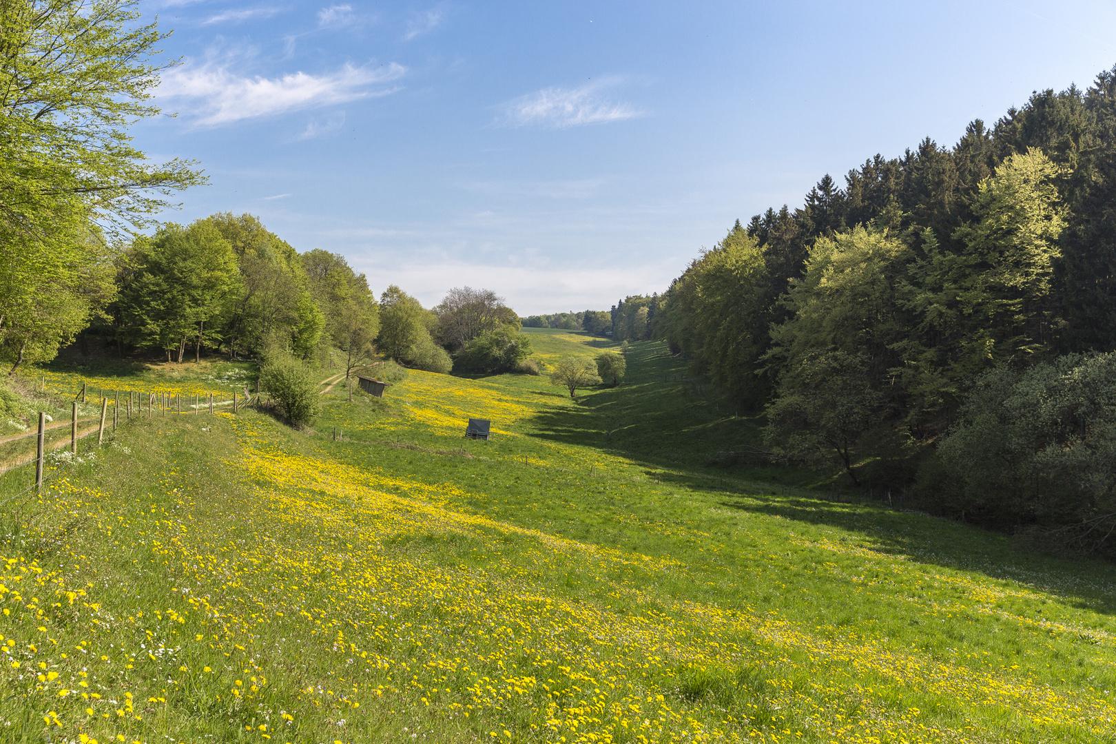 Waldwiese im Frühling