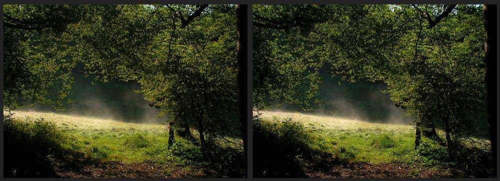 Waldwiese im Morgenlicht