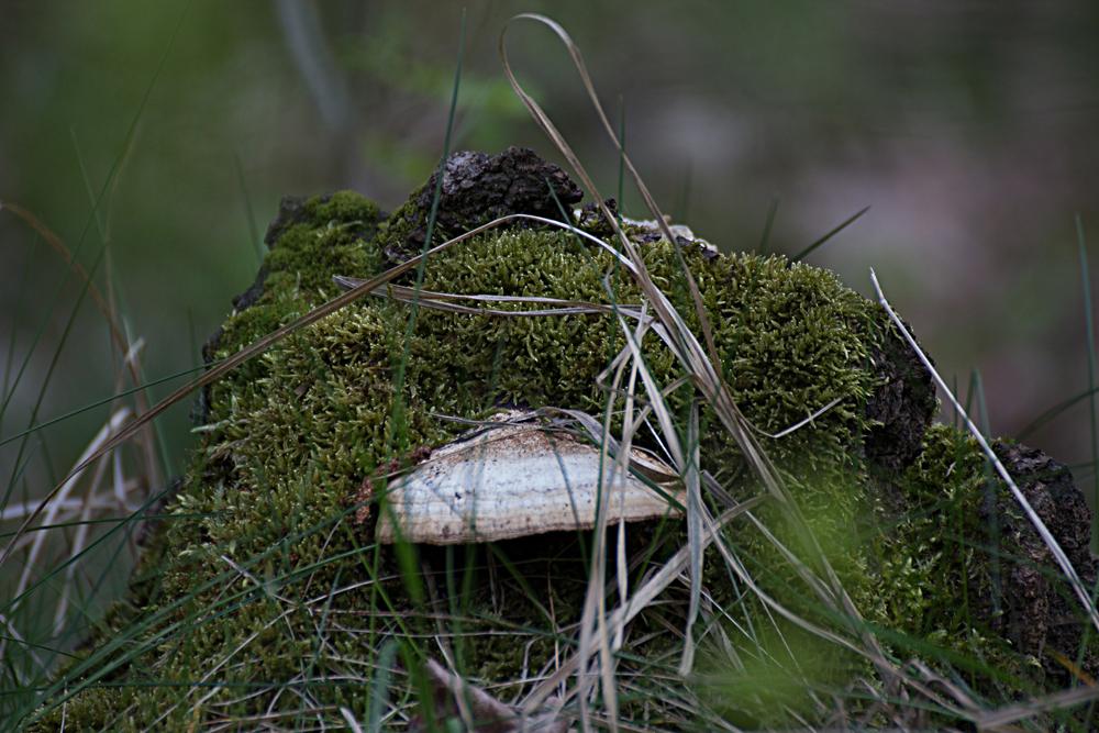 Waldydill