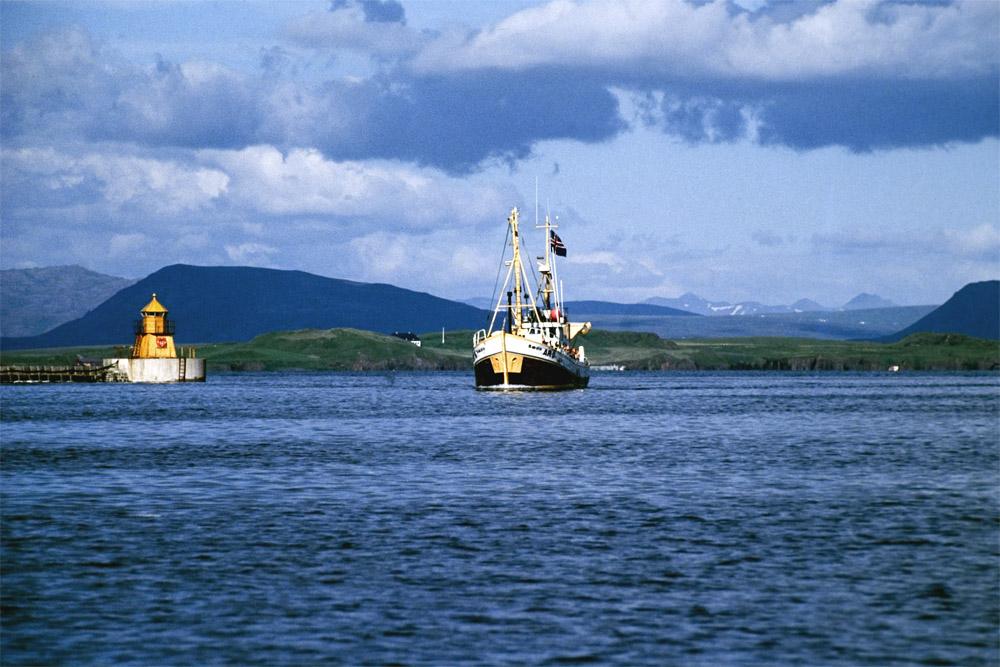 Walfänger in Island 2