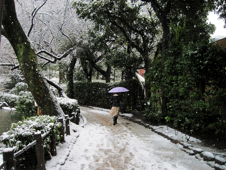 Walk Down Winter's Road