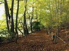 Walk in the woods - Surrey England