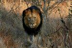 walking in the Kruger Park