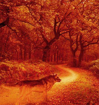 walking man´s road