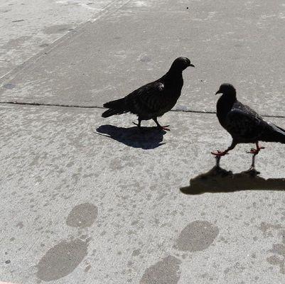 walking wet