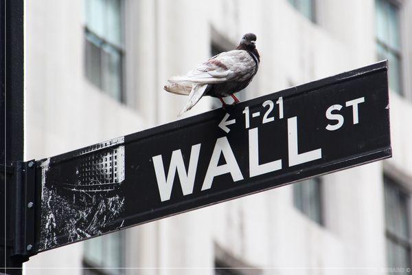 Wall Street - Trader Pigeon