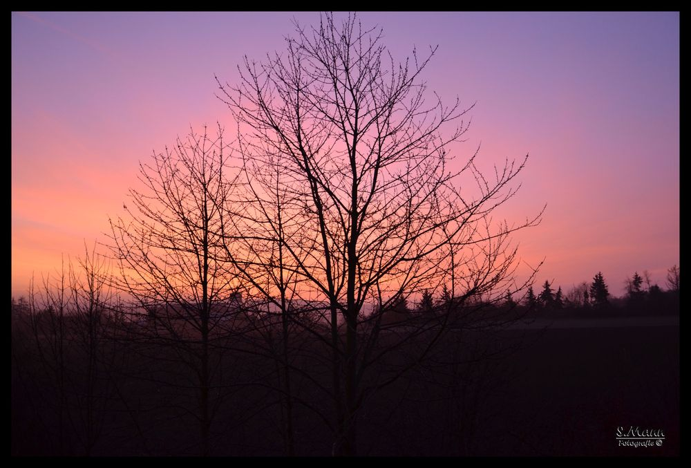 Wallertheim Sonnenaufgang 2