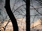 walnut & birch