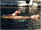 Walrosse bei Hagenbeck - Der Kleine und seine Mama