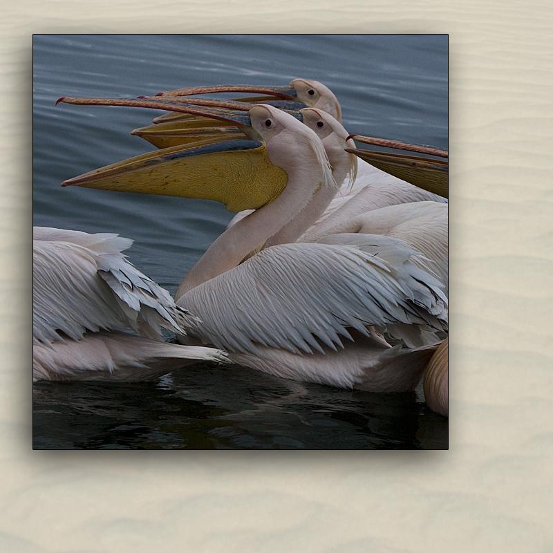 walvis bay 4