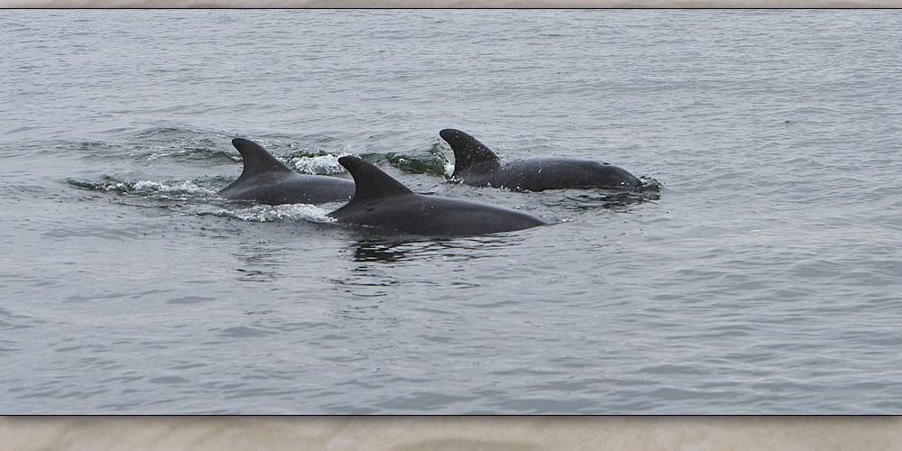 walvis bay 7