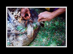 Wamena und Umgebung 005