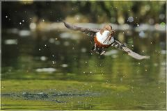 Wamsel-Serie: Rückflug zum Nest