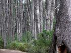 Wand aus Bäumen
