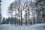 Wandern im Werdauer Wald