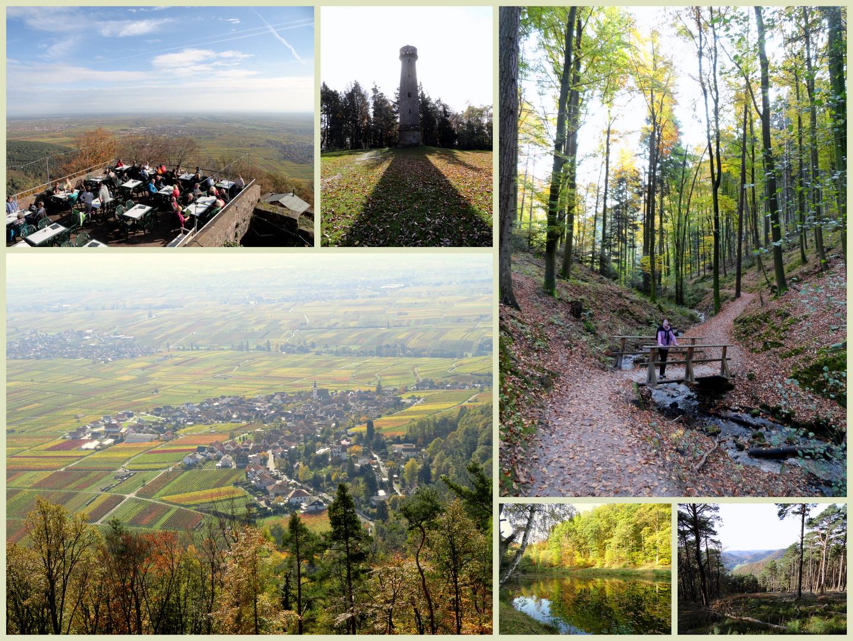 Wanderparadies Pfälzerwald