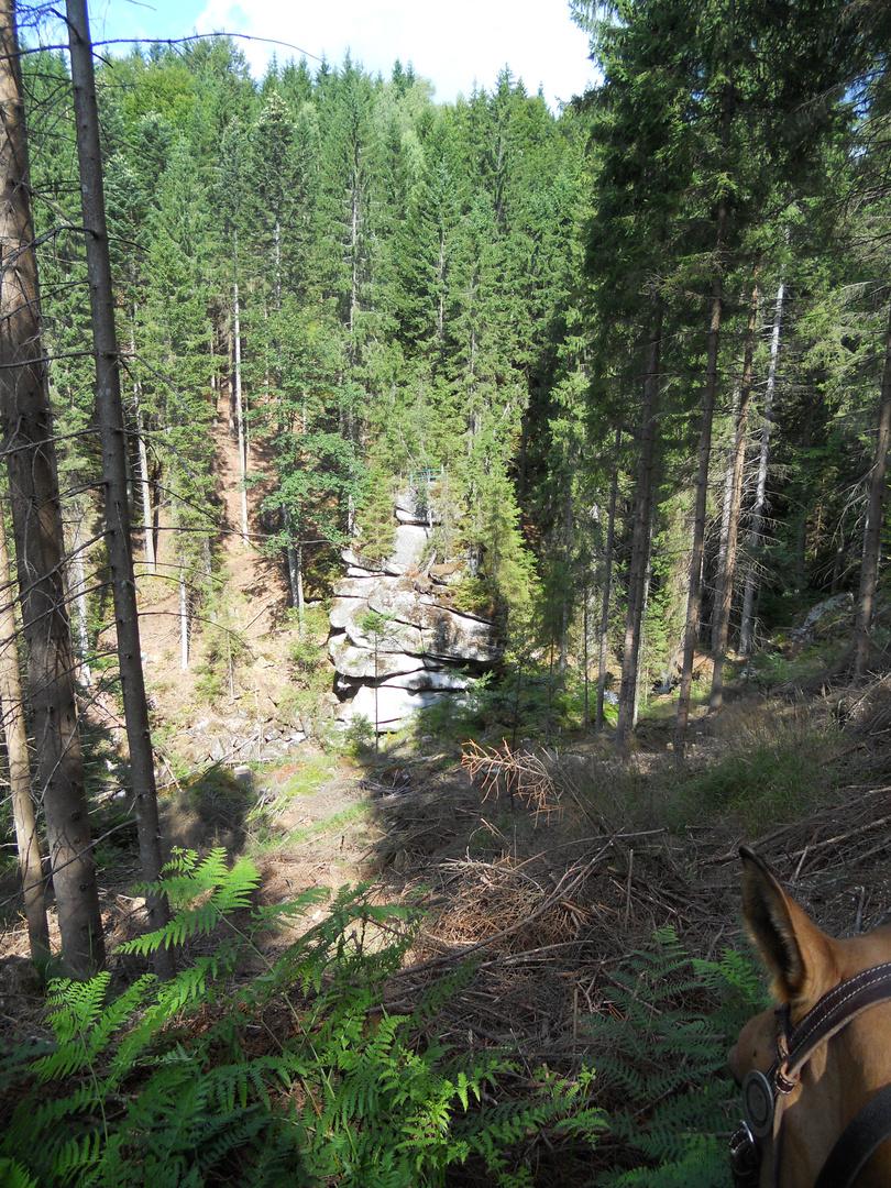 Wanderritt durch wunderschöne Wälder