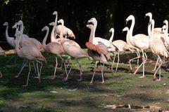 Wandertag bei den Flamingos