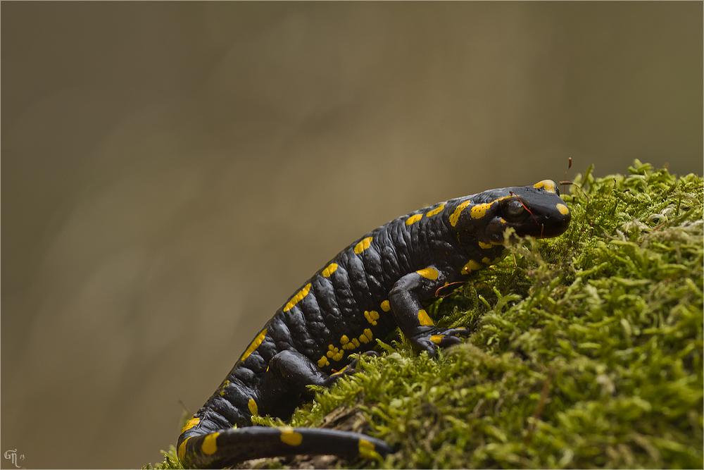 Wanderung der Amphibien ( 2 )