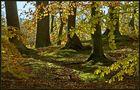 Wanderung durch den Herbst IV