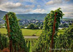 Wanderung durch die Weinberge bei Trittenheim