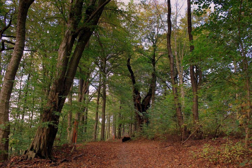 -Wanderung im Herbstwald-