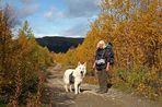 Wanderung mit Hund .....