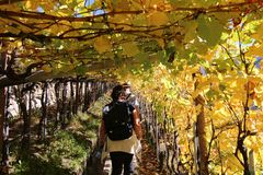 Wanderung unter den Weinreben.