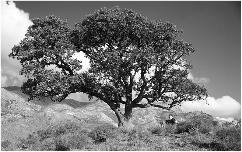 Wanderung zum Olivenbaum - 3