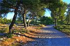 Wanderweg am Morgen