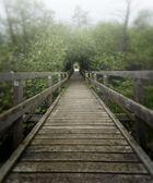Wanderweg im Moor