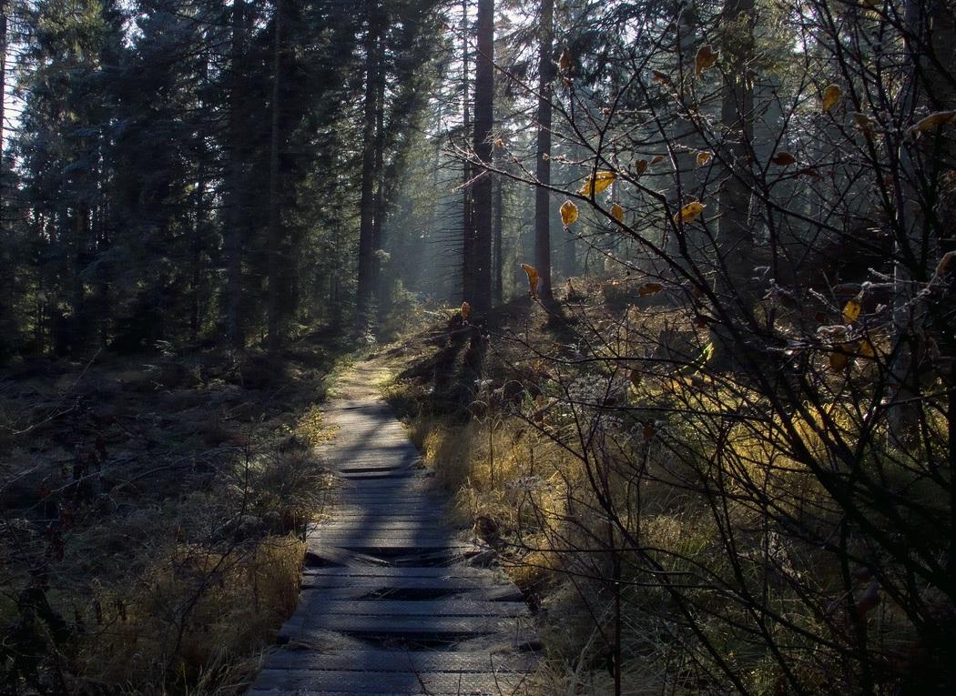Wanderweg in einem Hochmoor