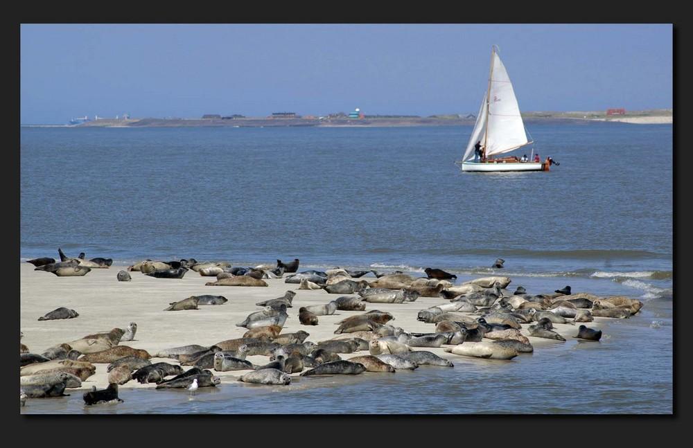 Wangeroo Nordsee
