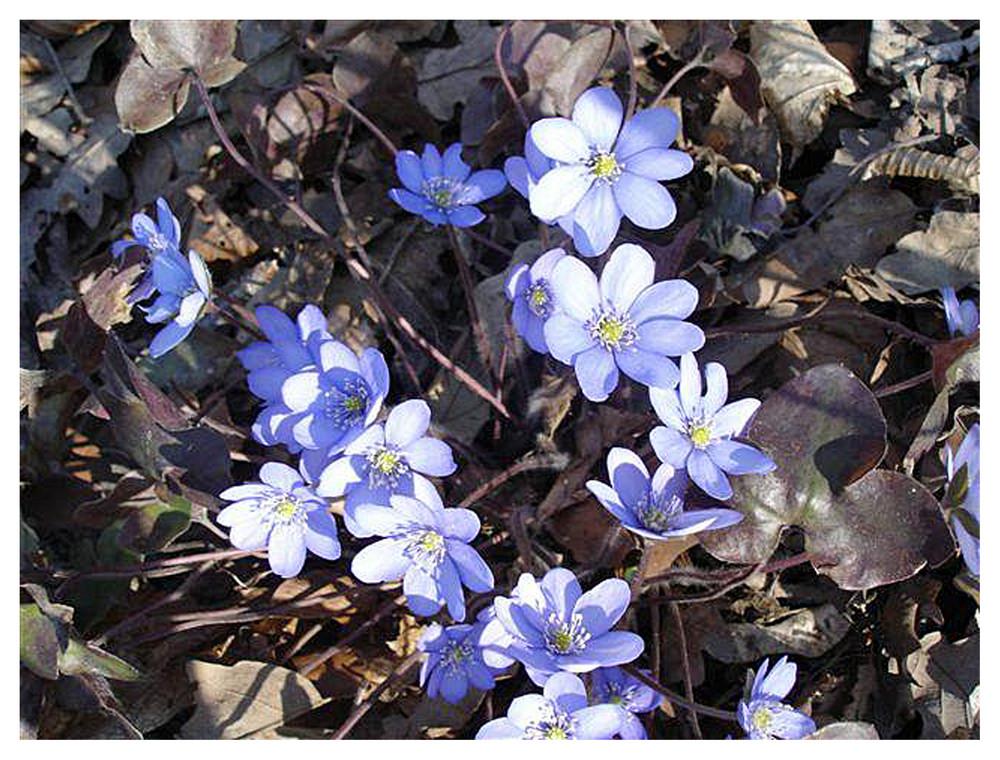 Wann können wir uns an den frühlingsblumen heuer erfreuen???
