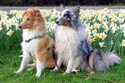 Wann kommt endlich Frühling