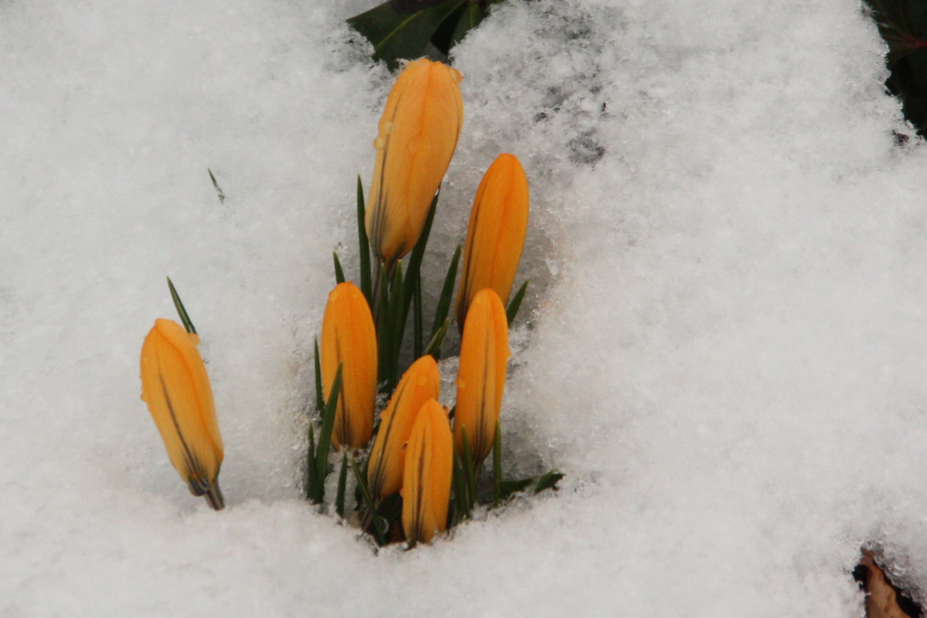 Wann wird es mal riechtig Frühling Hä?