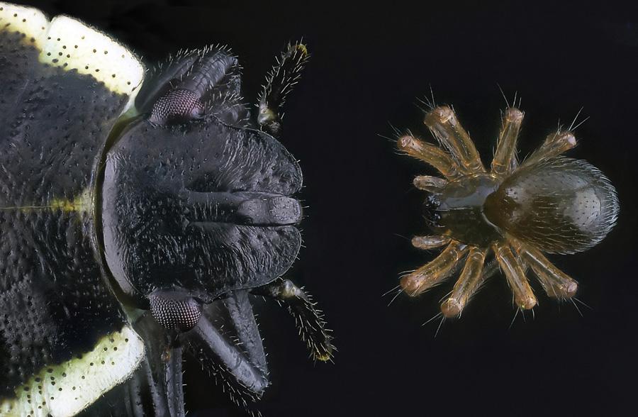 Wanze vs. Spinnchen